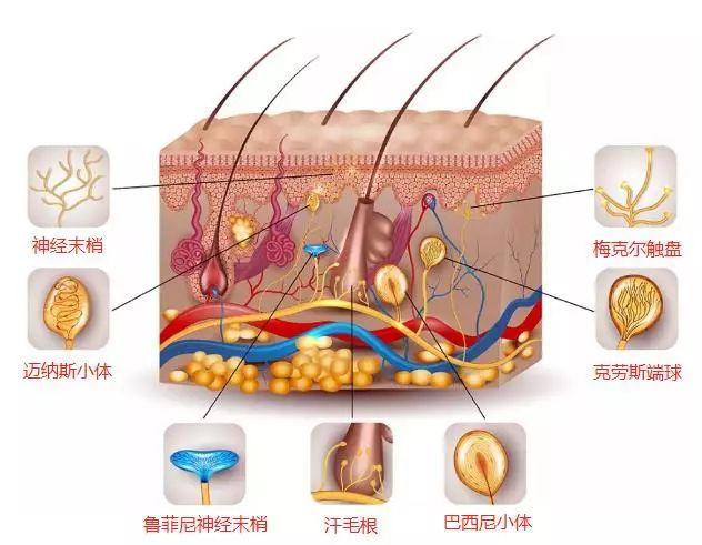 干细胞除了治病,还有望成为最时髦的美容抗衰老技术!