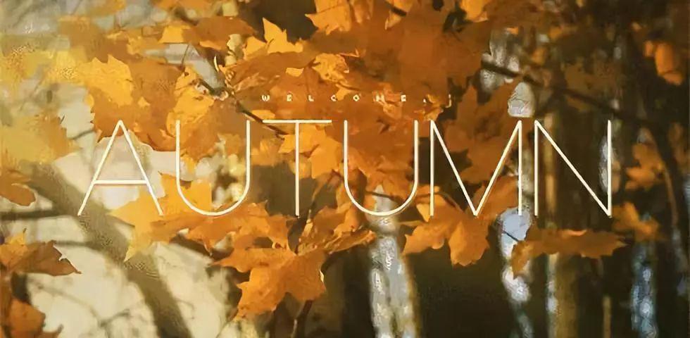 秋膘,我劝你善良!给秋膘的盒饭在这里,了解一下!| 日本整容整形